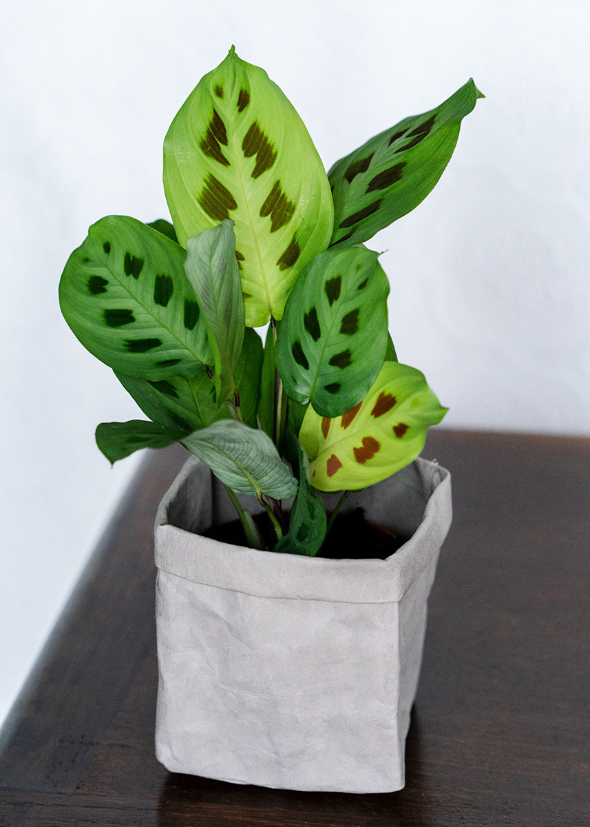Style your house plants